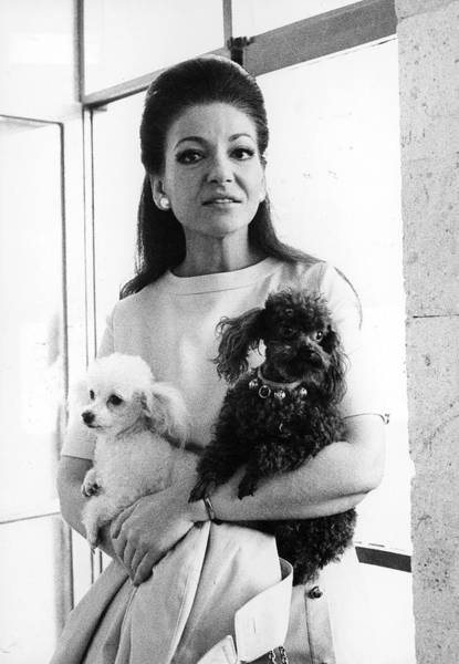 Poodle Photograph - Opera Singer Maria Callas W. Her by Pix Inc.