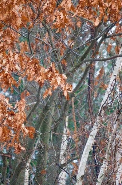Wall Art - Photograph - Orange And Birch by Greg Hayhoe