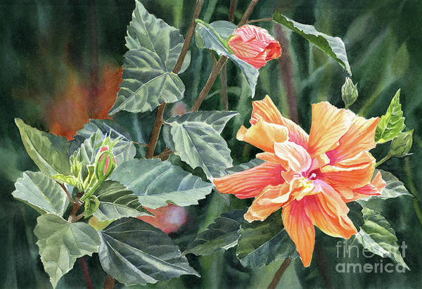 Hibiscus Flower Painting - Orange And Deep Pink Double Hibiscus With Dark Background by Sharon Freeman