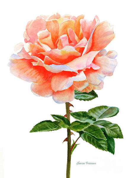 Wall Art - Painting - Orange And Gold Rose With Leaves by Sharon Freeman