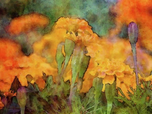 Photograph - Orange And Rain 6986 Idp_2 by Steven Ward