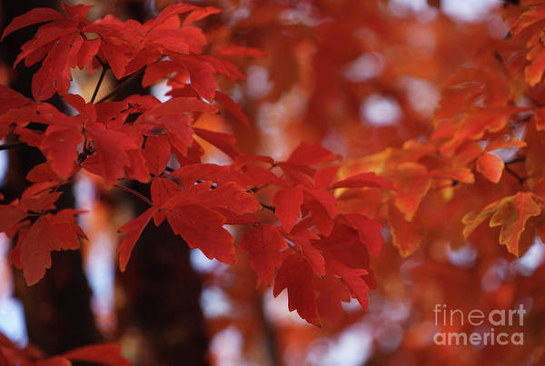 Photograph - Orange And Red Fantasy by Rachel Cohen