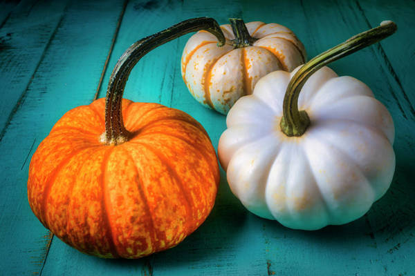 Wall Art - Photograph - Orange And White Pumpkins by Garry Gay