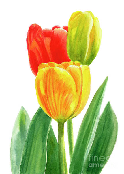 Freeman Wall Art - Painting - Orange And Yellow Tulips With Bud by Sharon Freeman