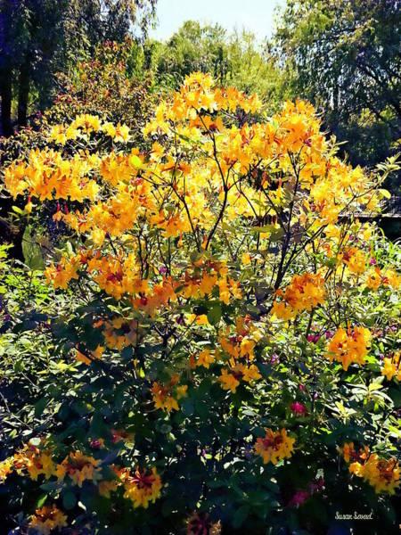 Photograph - Orange Azalea by Susan Savad