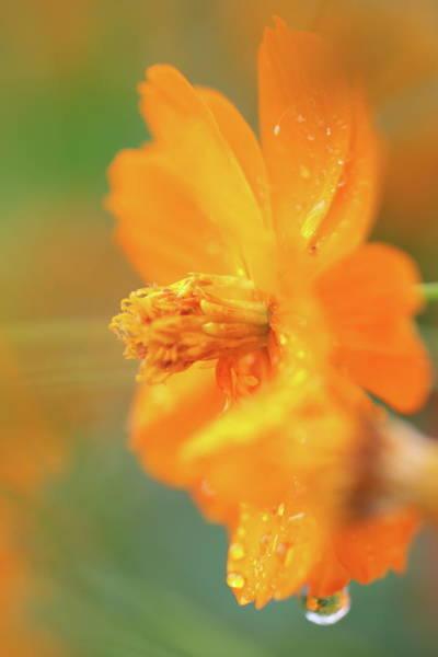 Wall Art - Photograph - Orange Bloom In The Rain by Elizabeth Ramirez