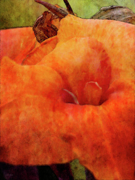 Photograph - Orange Blush 4203 Idp_2 by Steven Ward