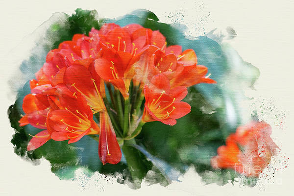Photograph - Orange Burst by Susan Warren