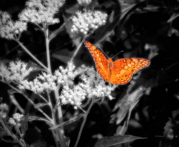 Wall Art - Photograph - Orange Butterfly Color Select by Brian Wallace