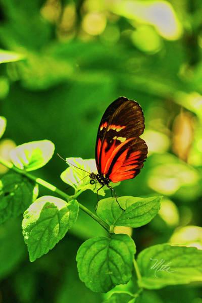 Photograph - Orange Butterfly On Leaf by Meta Gatschenberger
