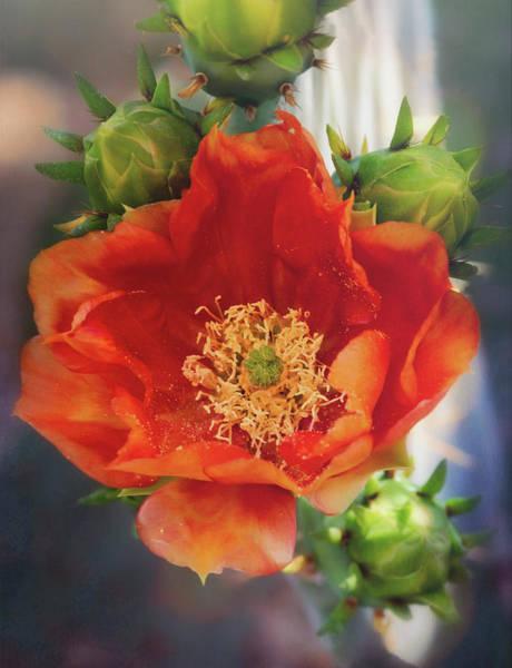 Wall Art - Photograph - Orange Cacti Flower  by Saija Lehtonen