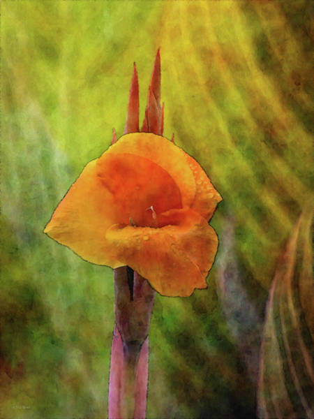 Photograph - Orange Cannas 5156 Idp_2 by Steven Ward