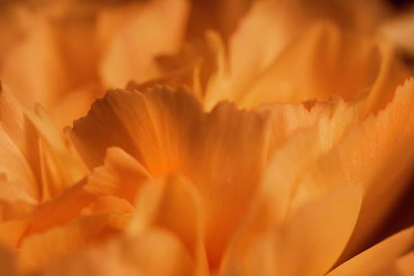 Photograph - Orange Carnation Macro by Keith Smith