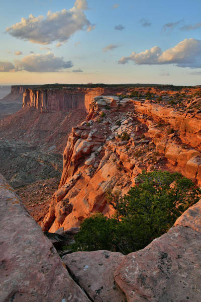 Photograph - Orange Cliffs Glow In Canyonlands by Ray Mathis