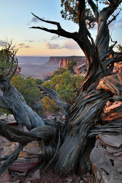Photograph - Orange Cliffs Juniper At Sunset by Ray Mathis