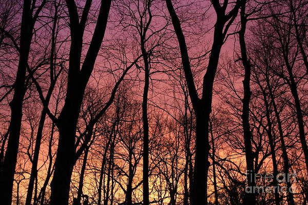 Photograph - Orange Dawn  by Paula Guttilla