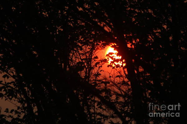 Photograph - Orange Daybreak by Ann E Robson
