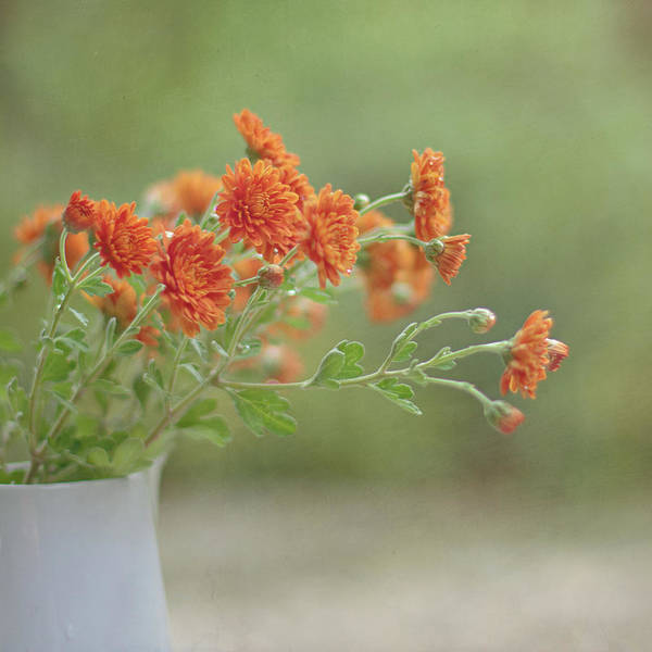 Vase Of Flowers Photograph - Orange Flower by Pamela N. Martin
