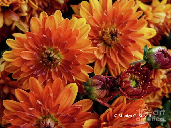 Photograph - Orange Flowers No. 14 by Monica C Stovall