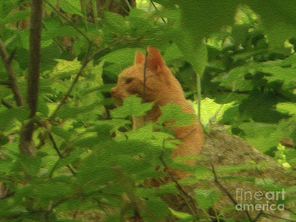 Photograph - Orange Forest Cat by Rockin Docks