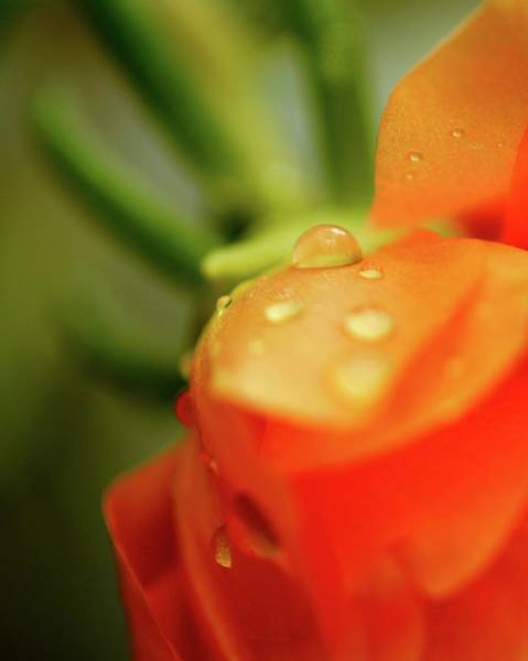 Photograph - Orange Glow by Susan Callaway