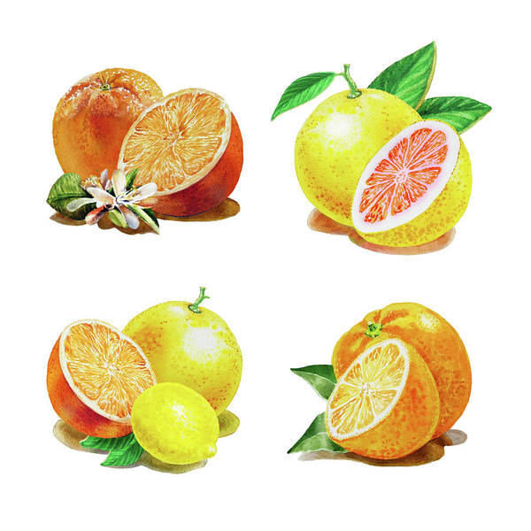 Wall Art - Painting - Orange Grapefruit Lemon Watercolor Fruit Illustration by Irina Sztukowski