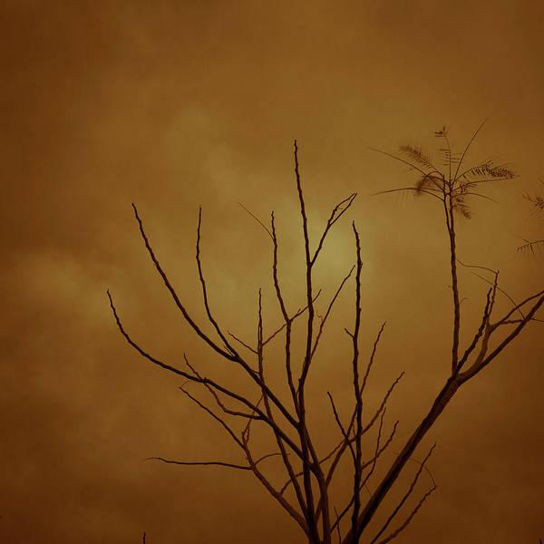 Bahrain Photograph - Orange by Heshaaam