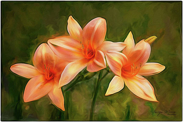 Wall Art - Photograph - Orange Impressionist Lilies by George Moore