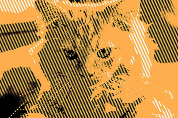 Digital Art - Orange Kitty Line Art by Don Northup