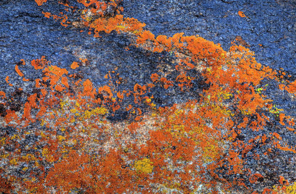 Wall Art - Photograph - Orange Lichen On Granite by Darrell Gulin