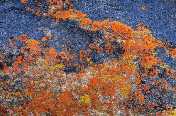 Orange Lichen Photograph - Orange Lichen On Granite by Darrell Gulin