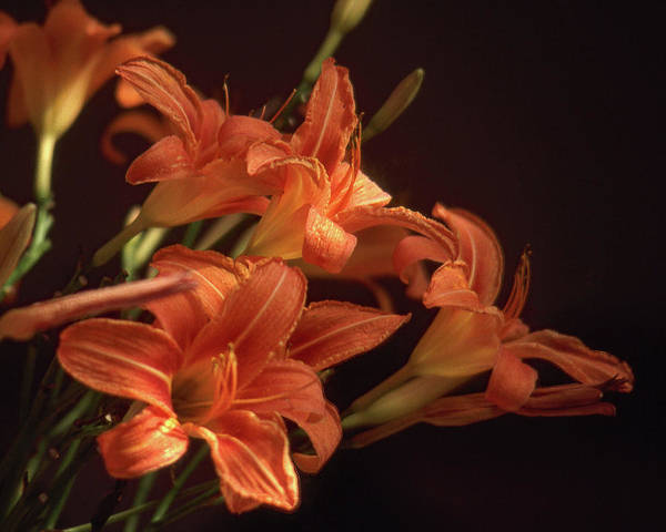 Wall Art - Photograph - Orange Lilies #2 by Jerry Griffin