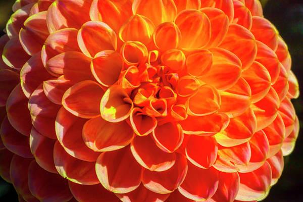 Wall Art - Photograph - Orange Lovely Dahlia by Garry Gay