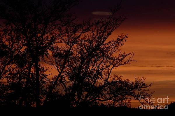Photograph - Orange Morning by Ann E Robson