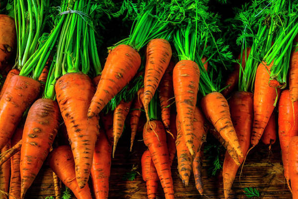 Wall Art - Photograph - Orange Organic Carrots by Garry Gay