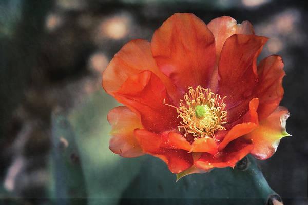 Wall Art - Photograph - Orange Prickly Pear Bloom  by Saija Lehtonen
