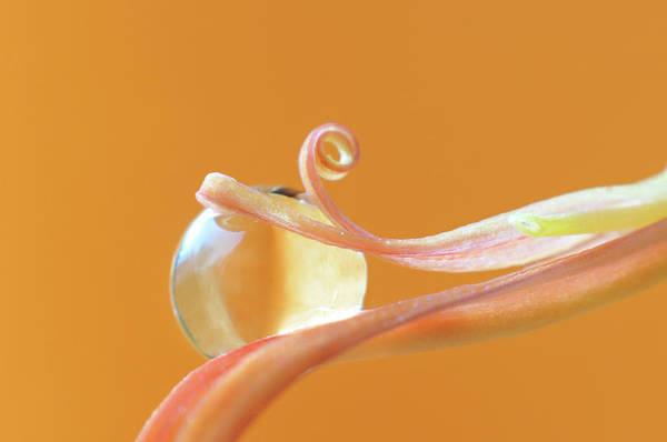 Photograph - Orange Rain by Michelle Wermuth