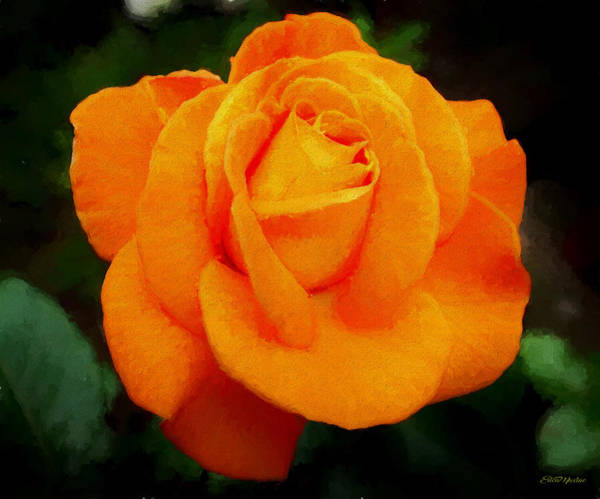 Painting - Orange Rose 971 - Painting by Ericamaxine Price