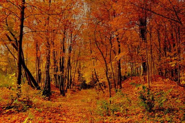 Gorecki Photograph - Orange Silence by Henryk Gorecki