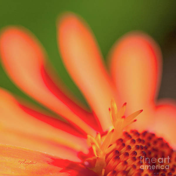 Photograph - Orange Sunshine by Michelle Constantine