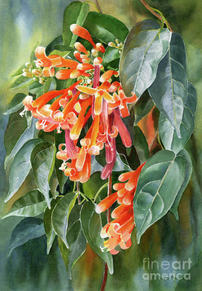 Pyrostegia Venusta Wall Art - Painting - Orange Trumpet Flame Vine by Sharon Freeman