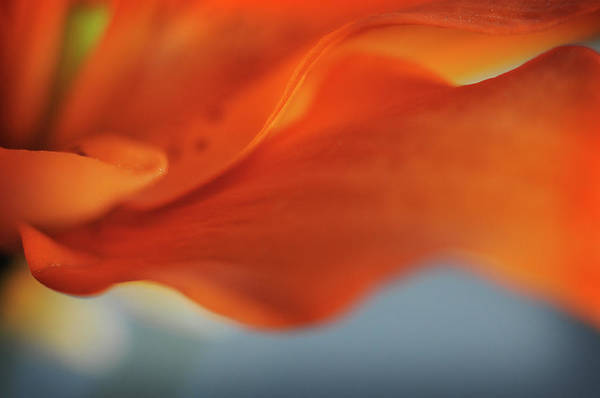 Photograph - Orange Waves by Michelle Wermuth