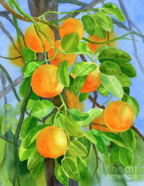 Citrus Painting - Oranges On A Branch With Background by Sharon Freeman