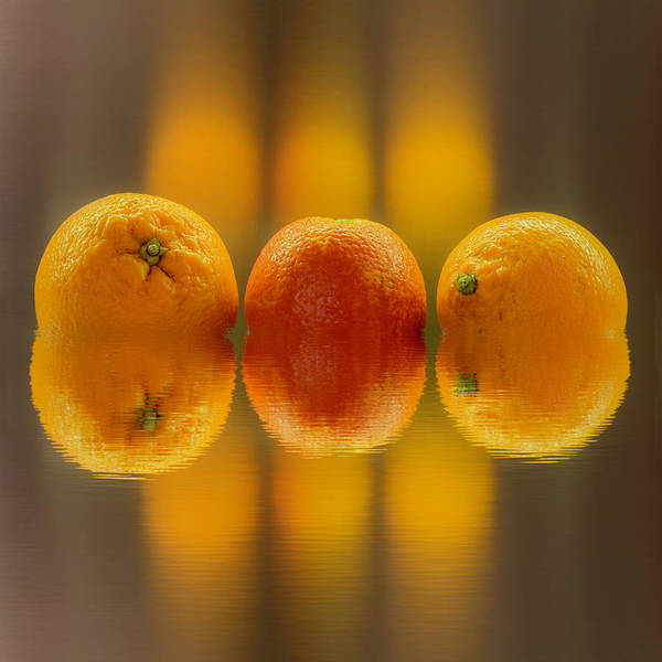 Photograph - Oranges by Wolfgang Stocker