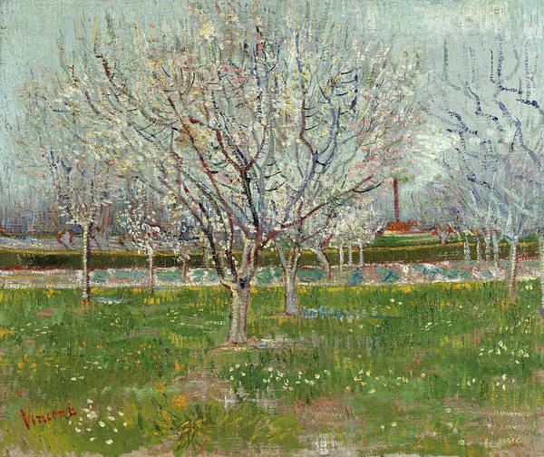 Almond Painting - Orchard In Blossom, Plum Trees, 1888 by Vincent van Gogh