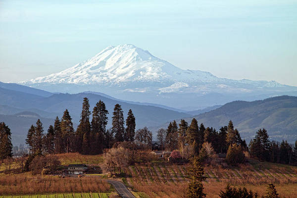 Mt Hood Photograph - Orchards In Oregon With Mt Adams In by Lynn Suckow Photography