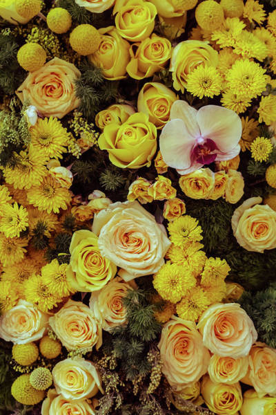 Photograph - Orchid Among Yellow Roses by Silvia Marcoschamer
