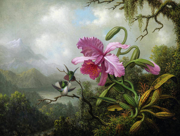 Wall Art - Painting - Orchid And Hummingbirds Near A Mountain Lake, 1890 by Martin Johnson Heade
