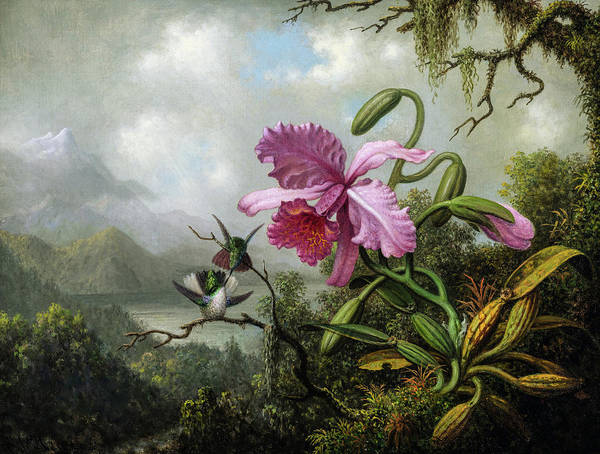 Wall Art - Painting - Orchid And Hummingbirds Near A Mountain Lake by Martin Johnson Heade