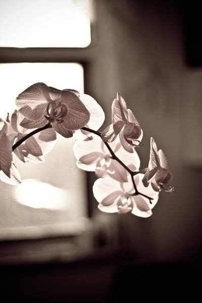 Fragility Photograph - Orchid And  Sunrise by Serhio.com Photography By Sergei Yahchybekov